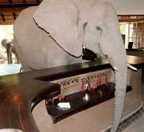 Hotel guests at the Mfuwe Lodge in Zambia will have no need to go out on safari, after a hungry herd of elephants wandered into their lobby.
